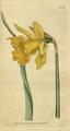 The Botanical Magazine, Plate 51 (Volume 2, 1788).png