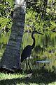 The Nature Around Us 3e (290164634).jpg