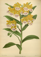 The Orchid Album-02-0081-0074.png