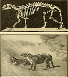 The age of mammals in Europe, Asia and North America (1910) (17918467786).jpg