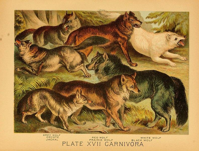 File:The animal kingdom (Plate XIV) (6130244982).jpg