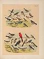 The birds of North America (PL. CIV) (6022162327).jpg