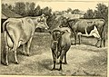 The breeds of live stock, and the principles of heredity (1887) (14594716320).jpg