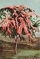 The ornamental trees of Hawaii (1917) (14579322978).jpg