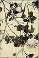 The ornamental trees of Hawaii (1917) (14742958706).jpg