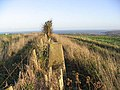 The trig point at 163m on Halidon Hill - geograph.org.uk - 276866.jpg