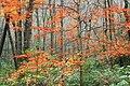 Thickhead Mountain Wild Area (5) (10585265783).jpg