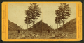 Thousand mile tree, 1000 miles West of Omaha, by Muybridge, Eadweard, 1830-1904.png