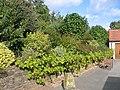 Three Choirs Vineyard garden - geograph.org.uk - 61935.jpg
