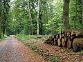 Todtenrode Wald Weg (3).JPG
