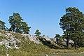 Torsburgen wall east of Ardre luke.jpg