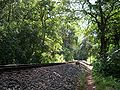 Track from kulem to dudhsagar.JPG