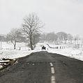 Tracteur, chien et neige, Auvergne.jpg