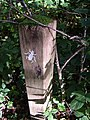 Trail marker in Andrew's Wood - geograph.org.uk - 243024.jpg