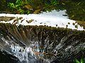 Trail to Lago do Fogo, São Miguel Island, Azores - panoramio - Eduardo Manchon (21).jpg