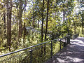 Tree top walk, Western Australia (10759114994).jpg