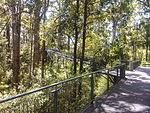 Tree top walk, Western Australia (10759114994).jpg