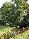 foto van Boschplaatse 4 De Boschplaatse, tuin