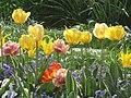 Tulipes au jardin des Tuileries.jpg
