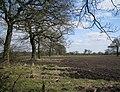 Two field boundaries missing - geograph.org.uk - 1769666.jpg