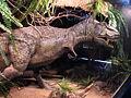 Tyrannosaurus-04-ZOO.Dvur.Kralove.jpg