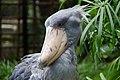 Ueno zoo, Tokyo, Japan (6154468275).jpg