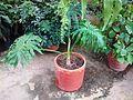 Una planta.jpg