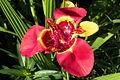 Unbekannte Blume-2.JPG