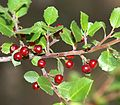 Unid. plant - Flickr - S. Rae (1).jpg