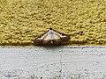 Unidentified-butterfly-20190610-145420.jpg