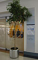 United Club (LAX) (7174936312).jpg