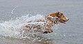 Viljo koirarannalla 14.jpg