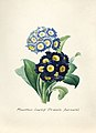 Vintage Flower illustration by Pierre-Joseph Redouté, digitally enhanced by rawpixel 55.jpg