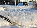 Vinter Bogesund - panoramio.jpg
