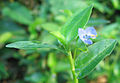 Violet Flower Small1.jpg
