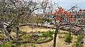 Vista de Plaza Francia desde Las Bóvedas 1.jpg