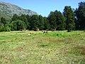Vista sureste desde el Valle de las Catas en Radal Siete Tazas.jpg