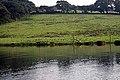 Waders in a creek side field - geograph.org.uk - 945845.jpg