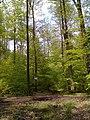 "Waldweg ""Erlebnispfad"" - geo.hlipp.de - 35265.jpg"