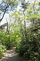 Walkway - Institute for Nature Study, Tokyo - DSC02144.JPG