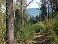 Wanderweg - panoramio (46).jpg