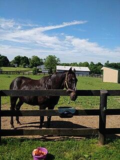 War Emblem American-bred Thoroughbred racehorse
