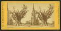 Washington elm, by G.J. Raymond & Co..png