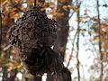 Wasp Nest (10616881705).jpg