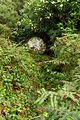 Wayside cross, near Trengwainton Carn - geograph.org.uk - 939446.jpg