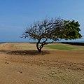 Weathered Tree.jpg