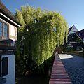 Weiden Schwörhausgasse 10-1 Ulm von Westen.jpg
