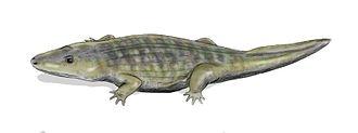 Induan - Wetlugasaurus