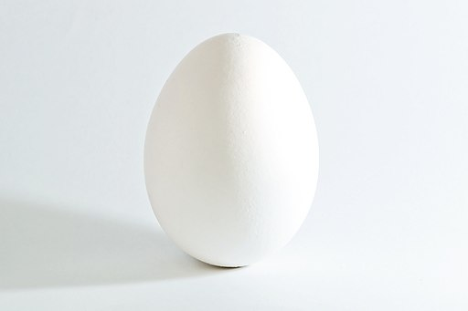 White chicken egg