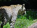 Wild life at zoo 26.jpg